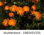 wild flowers meadow | Shutterstock . vector #1082431520