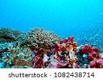 fish on underwater coral reef | Shutterstock . vector #1082438714