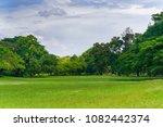 green tree in a beautiful park... | Shutterstock . vector #1082442374