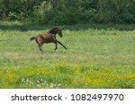 foal run on a spring pasture | Shutterstock . vector #1082497970