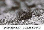 beautiful lizard closeup  macro ...   Shutterstock . vector #1082553440