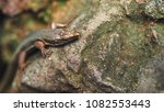 beautiful lizard closeup  macro ...   Shutterstock . vector #1082553443
