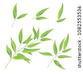 eucaliptus leaves vector set.... | Shutterstock .eps vector #1082553536