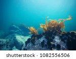 Underwater Water Blue