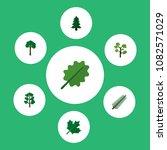 icon flat bio set of spruce ... | Shutterstock .eps vector #1082571029