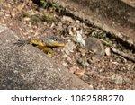 lizard on nature   Shutterstock . vector #1082588270
