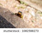 lizard on nature   Shutterstock . vector #1082588273