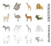 lama  ostrich emu  young... | Shutterstock .eps vector #1082592836