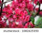 spring pink beautiful flowers... | Shutterstock . vector #1082625350