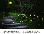 Stock photo fireflies in the bush at night in taiwan 1082662643