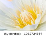 close up of blooming white... | Shutterstock . vector #1082724959