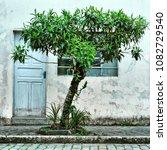 morretes  brazil   february 12  ... | Shutterstock . vector #1082729540