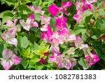 beautiful flowers on nature... | Shutterstock . vector #1082781383