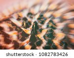 microscopic phot with organisms ... | Shutterstock . vector #1082783426