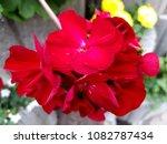 flowers on stones | Shutterstock . vector #1082787434