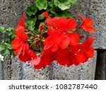 flowers on stones | Shutterstock . vector #1082787440