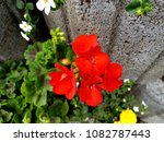 flowers on stones | Shutterstock . vector #1082787443