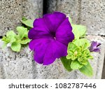 flowers on stones | Shutterstock . vector #1082787446