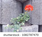 flowers on stones | Shutterstock . vector #1082787470
