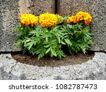 flowers on stones | Shutterstock . vector #1082787473