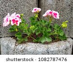 flowers on stones | Shutterstock . vector #1082787476