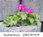 flowers on stones | Shutterstock . vector #1082787479