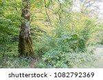 Stock photo autumn forest selva de irati fall beech jungle in navarra pyrenees of spain 1082792369