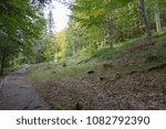 Stock photo autumn forest selva de irati fall beech jungle in navarra pyrenees of spain 1082792390