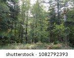 Stock photo autumn forest selva de irati fall beech jungle in navarra pyrenees of spain 1082792393