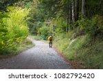 Stock photo autumn forest selva de irati fall beech jungle in navarra pyrenees of spain 1082792420