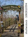 magee marsh  oak harbor ohio ...   Shutterstock . vector #1082810594