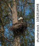 Small photo of Stork pair in the tall treetop nest in the Storchen Reservoir near Seltz, Alsace, France