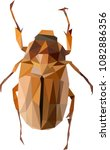 polynomial may bug  cockchafer... | Shutterstock .eps vector #1082886356
