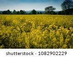 rape field on a sunny day | Shutterstock . vector #1082902229