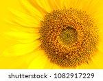 sunflower close up details of... | Shutterstock . vector #1082917229