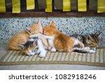 Stock photo pile of sleeping kittens on a doormat 1082918246