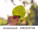 green single leaf in hand | Shutterstock . vector #1082929748
