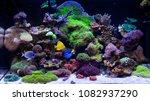 home coral reef aquarium | Shutterstock . vector #1082937290