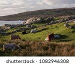 Irish Country Side Landscape  ...