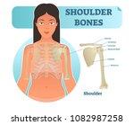 labeled human shoulder bone... | Shutterstock .eps vector #1082987258