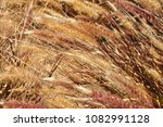 close up coloured reeds  macro... | Shutterstock . vector #1082991128