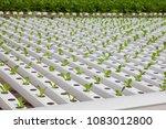 organic hydroponic vegetable... | Shutterstock . vector #1083012800