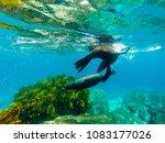 narooma  nsw   australia   1 1...   Shutterstock . vector #1083177026