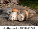 harvested at autumn amazing... | Shutterstock . vector #1083240770