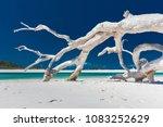 White Driftwood Tree On Amazin...