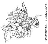 vector linear illustration of... | Shutterstock .eps vector #1083292646
