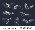 Set of vector birds. Eagles and hawks.