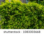 closeup green and yelow leaves... | Shutterstock . vector #1083303668