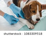 cropped image of veterinarian... | Shutterstock . vector #1083309518