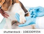 cropped image of veterinarian... | Shutterstock . vector #1083309554